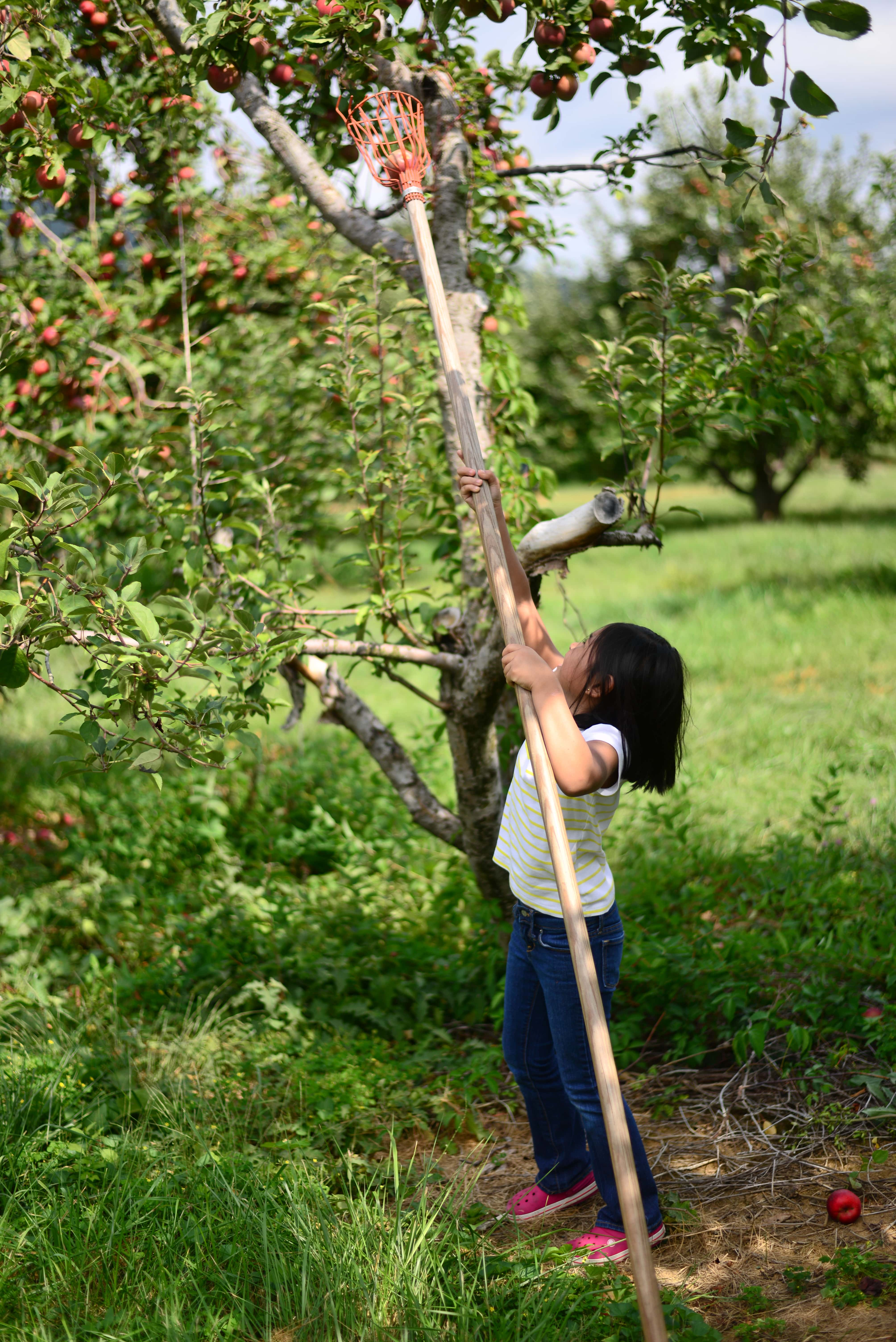 Apple and Pumpkin Picking